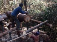 Local people collecting wood from local forest