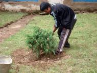 Planting tree in the garden